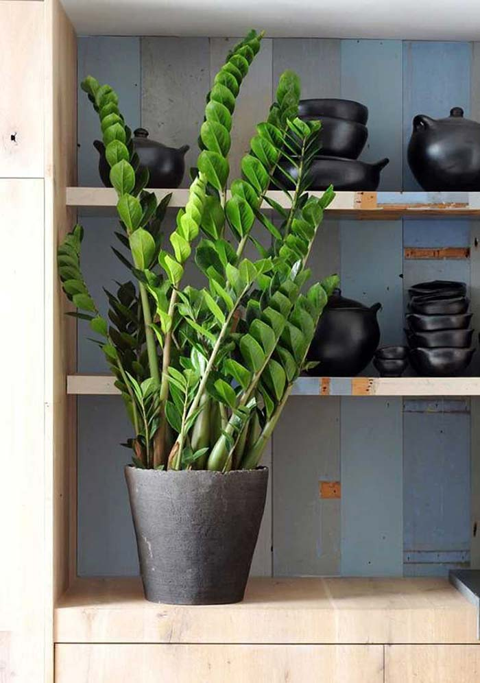 Cozinha rústica com vaso de zamioculca
