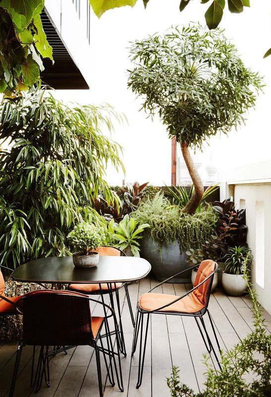 Jardim pequeno Urban Jungle