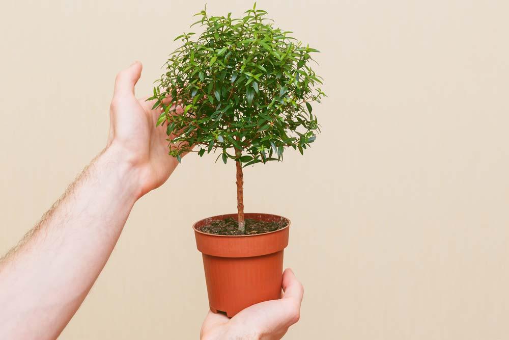 Vaso com bonsai