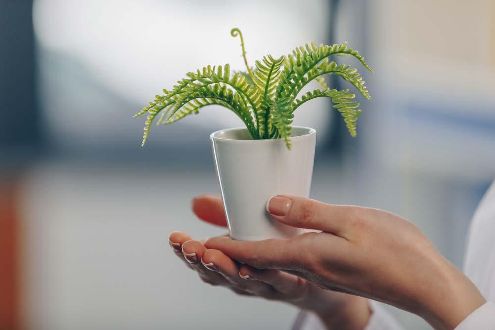 Vaso de samambaia ideal