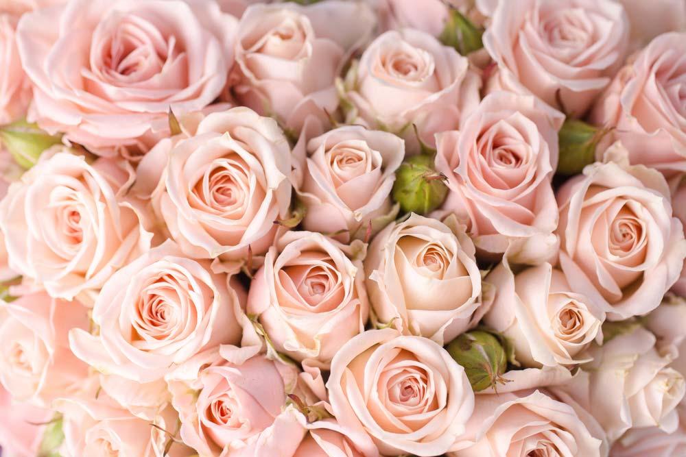 Essência de rosas para aromatizador de ambiente