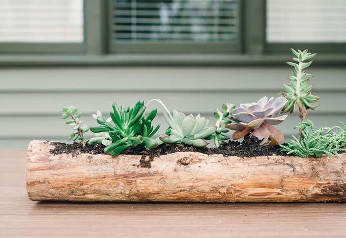 Ideia rústica e natural para plantar suculentas
