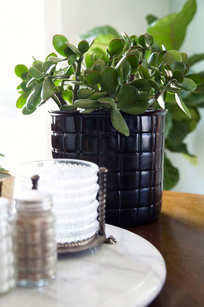 Planta jade na decoração
