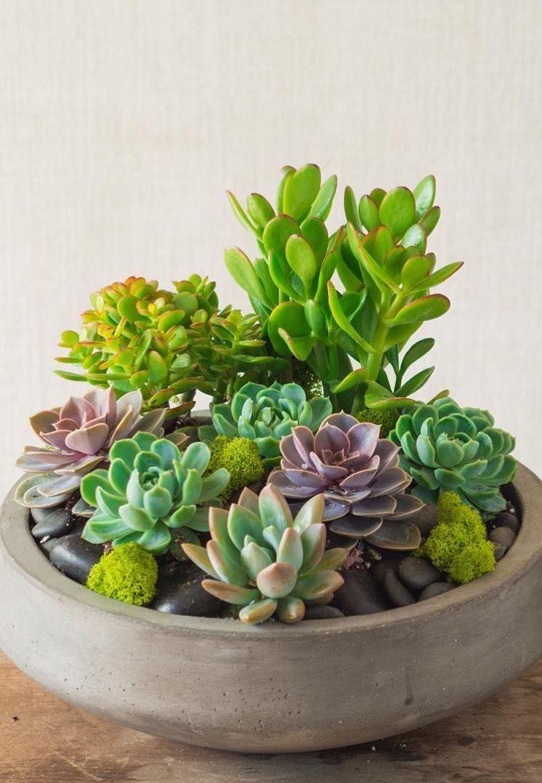 Pedras e suculentas fazem uma linda composição nesse vaso