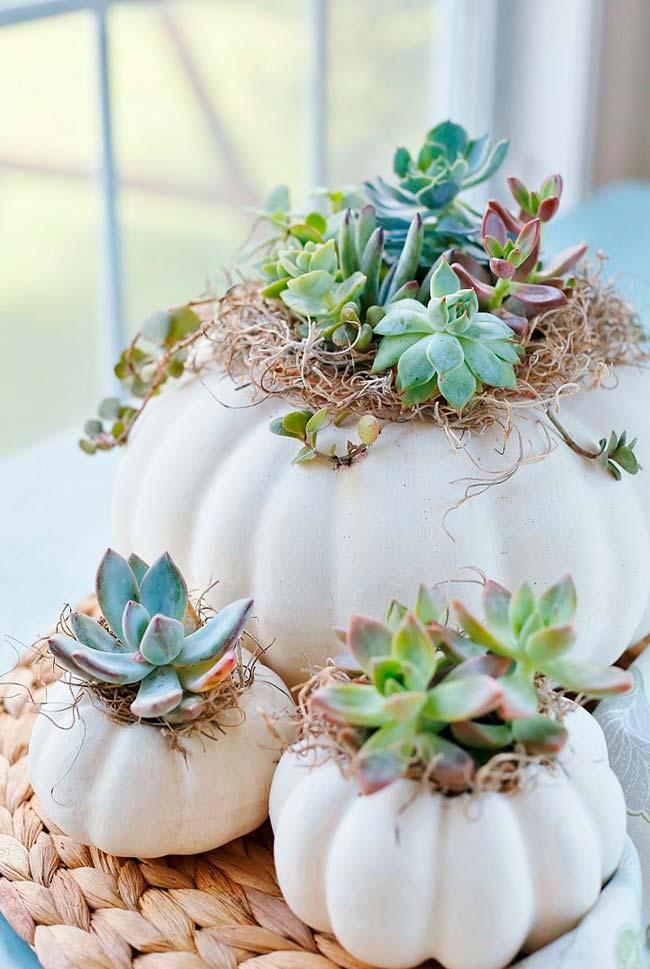 Vasos com formato de cabeça de alho para as suculentas
