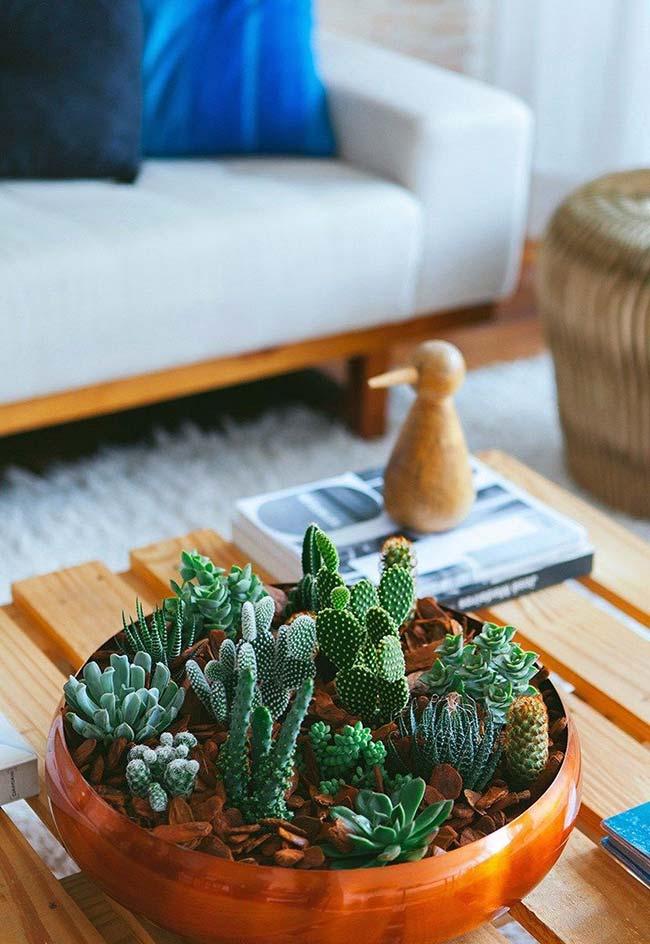 Vaso de cobre foi tomado por diferentes espécies de suculentas