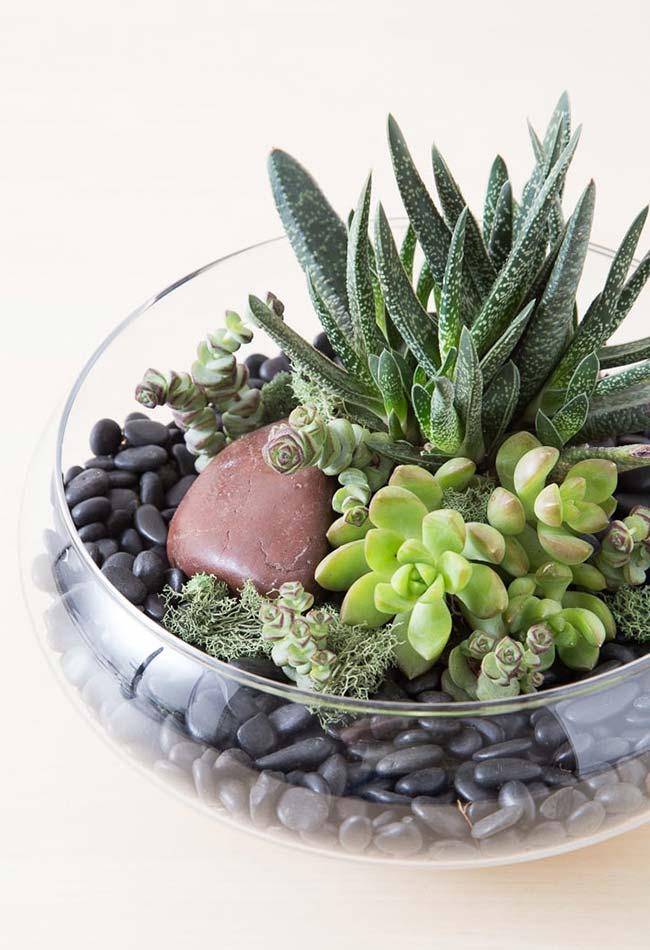 Vasos de vidro permitem visualizar melhor as suculentas em seu interior