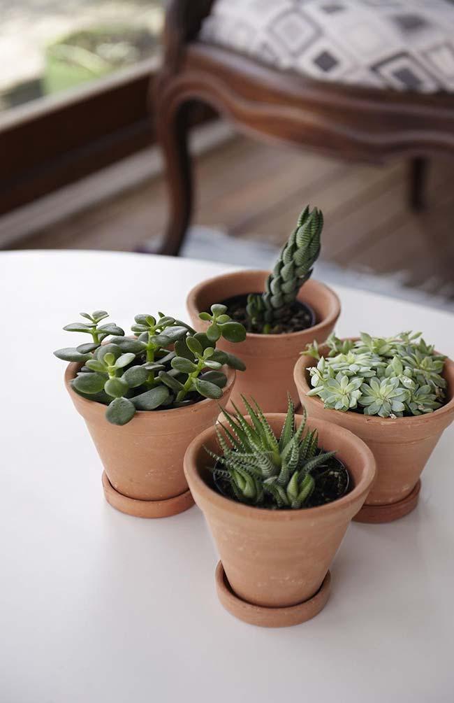 Atenção com as suculentas plantadas em vasos de barro