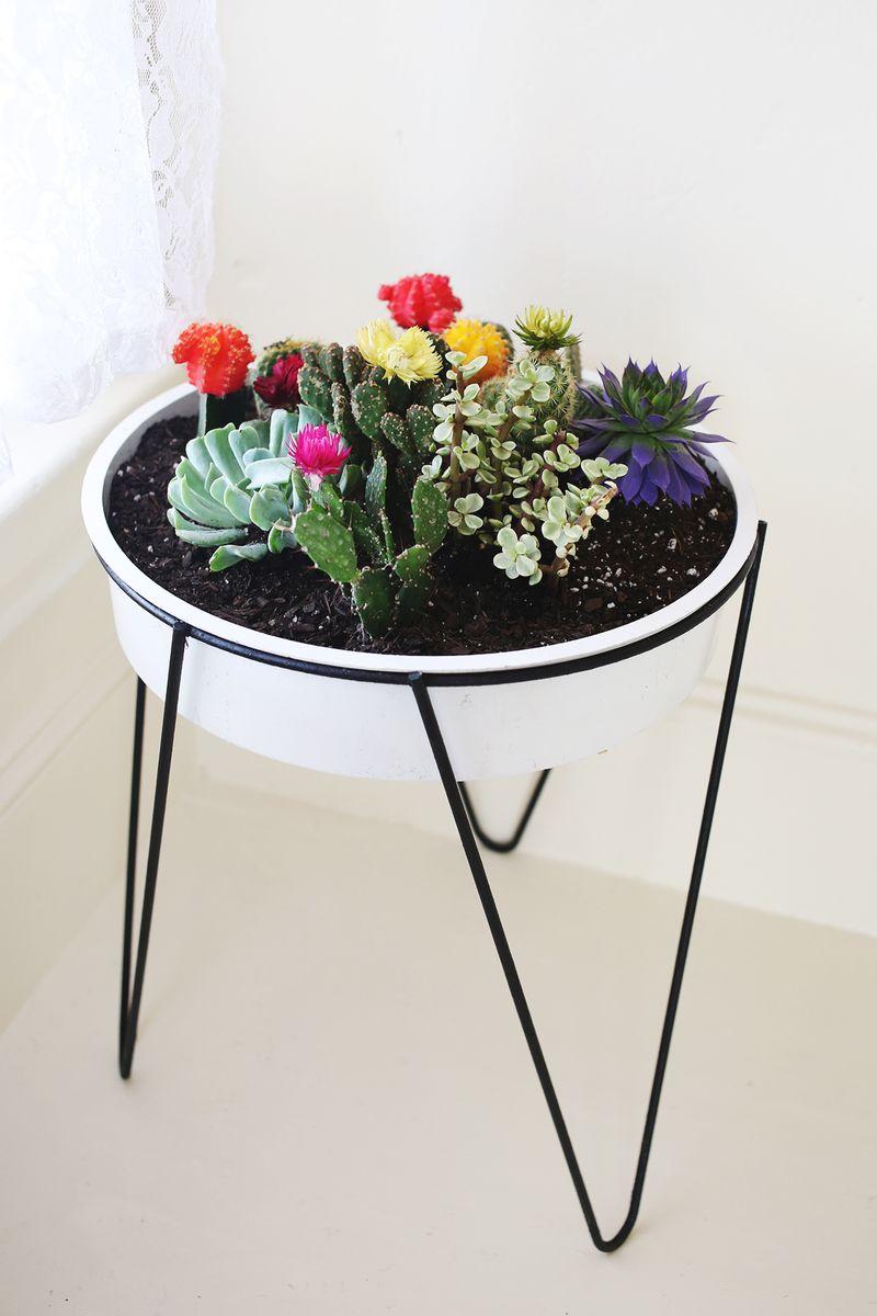 Vaso alto com mini cactos e suculentas na decoração da casa