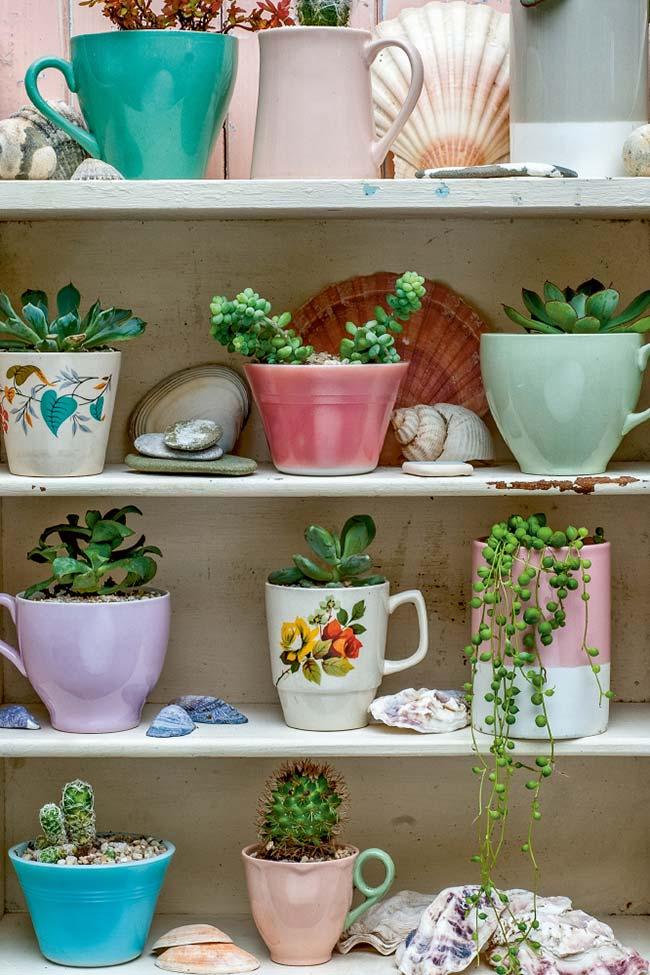 Estante de suculentas plantadas em xícaras