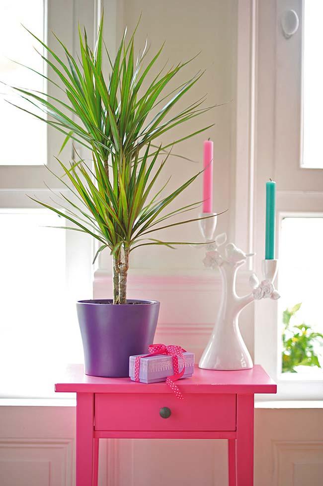 Vasinho colorido para a palmeira ráfia