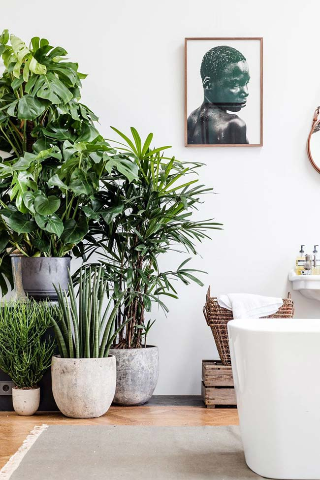 Cantinho verde na sala com palmeira ráfia