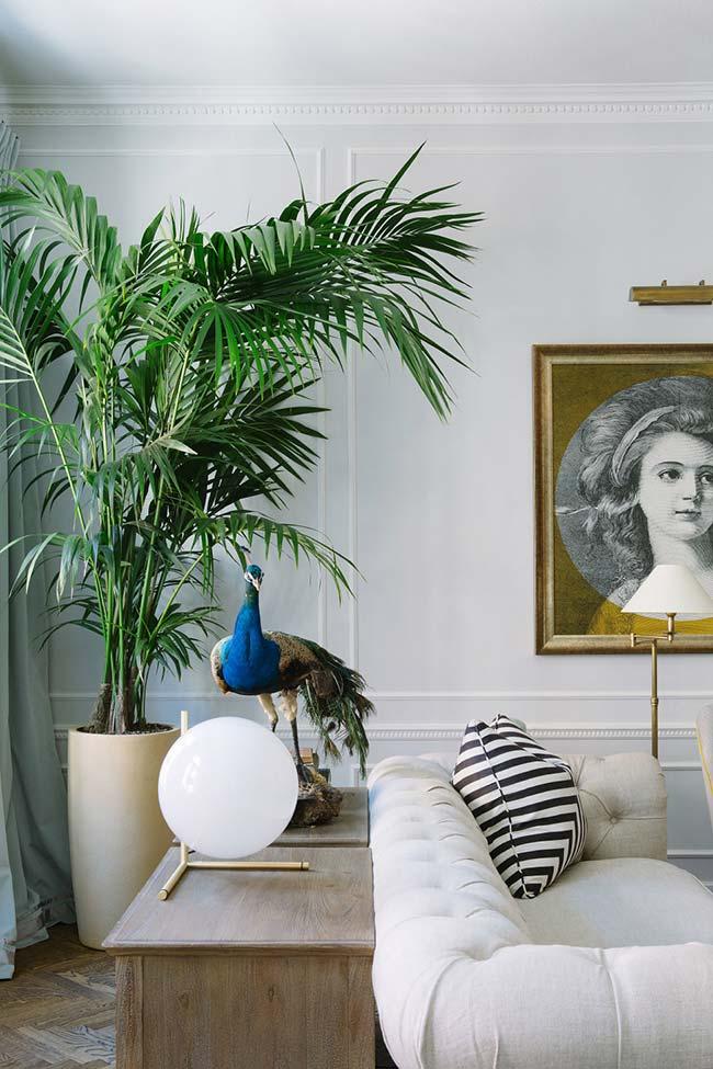 Vaso alongado acompanha o crescimento da palmeira ráfia