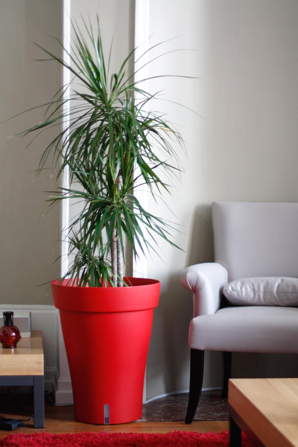 Vaso vermelho destaca as cores da palmeira ráfia