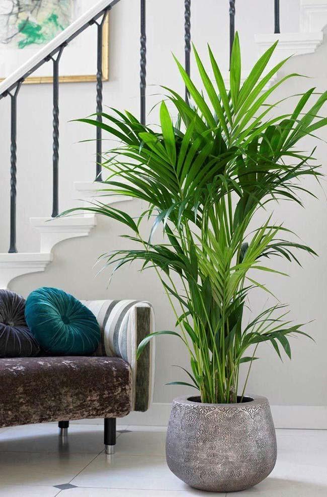 Ambiente de tons neutros com palmeira ráfia