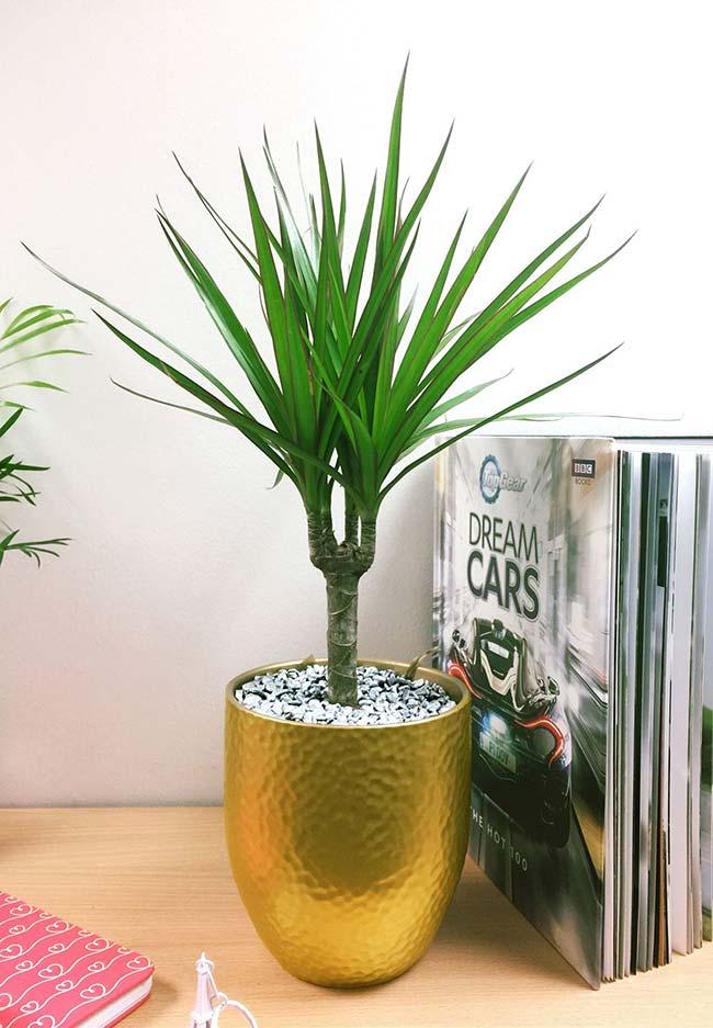 mini Palmeira Ráfia para decoração