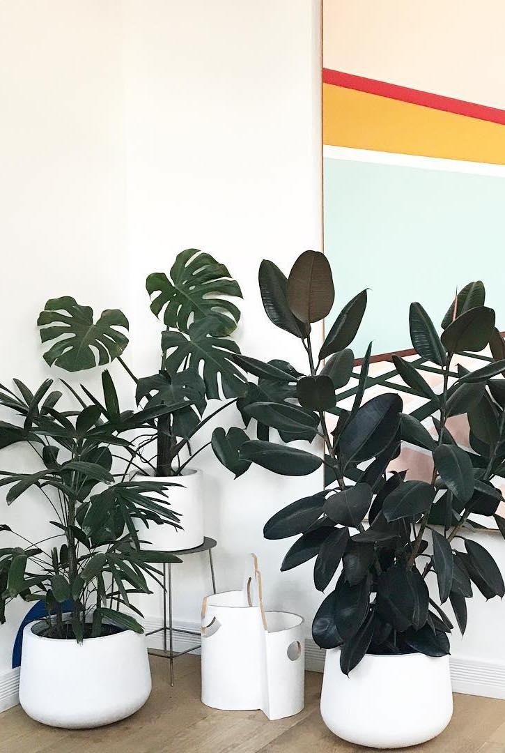 Vasos iguais, plantas diferentes