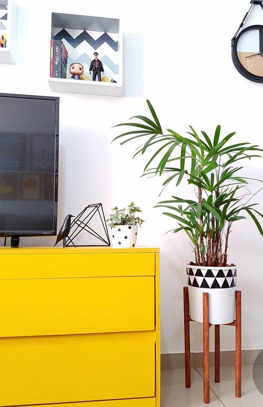 Palmeira ráfia discreta marcando presença na sala