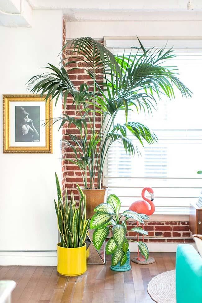 Vaso de palmeira ráfia se destaca em meio a outras plantas