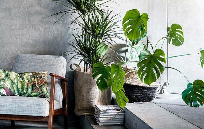 Palmeira ráfia: como cuidar, plantar e dicas de decoração