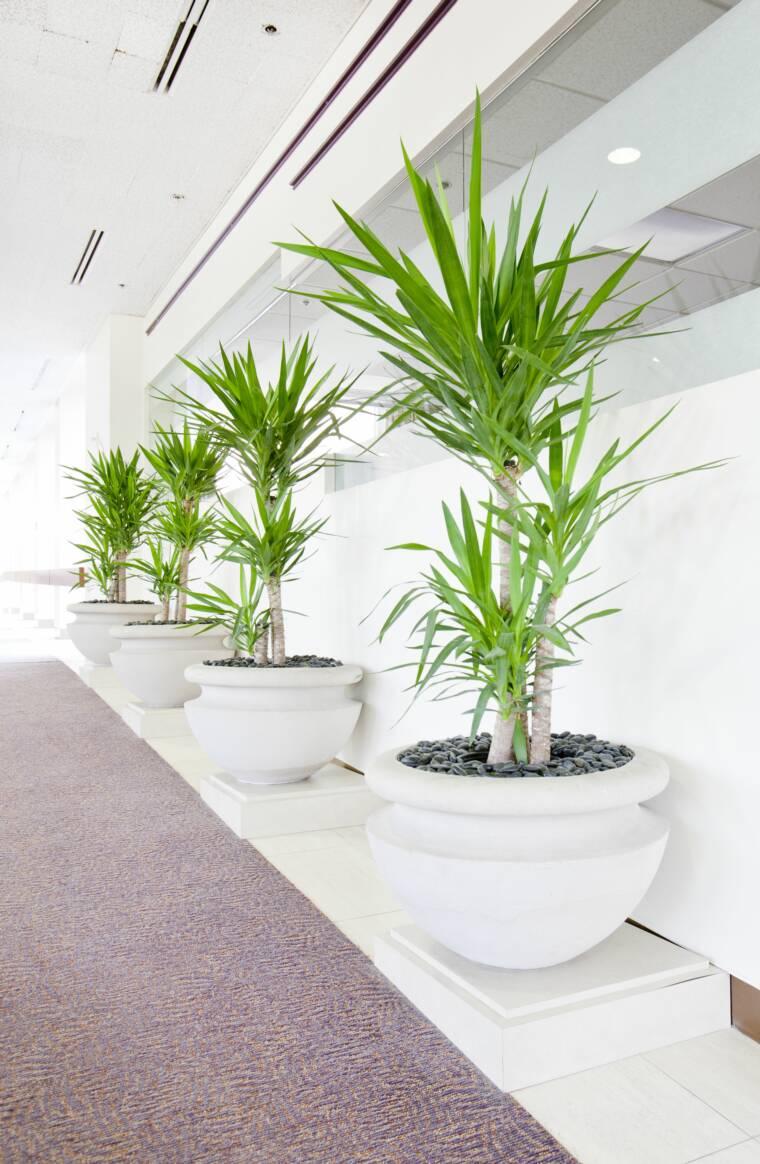 Corredor decorado com vasos de palmeira ráfia