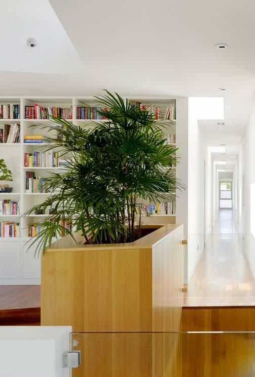 Decoração com palmeira ráfia separando os ambientes