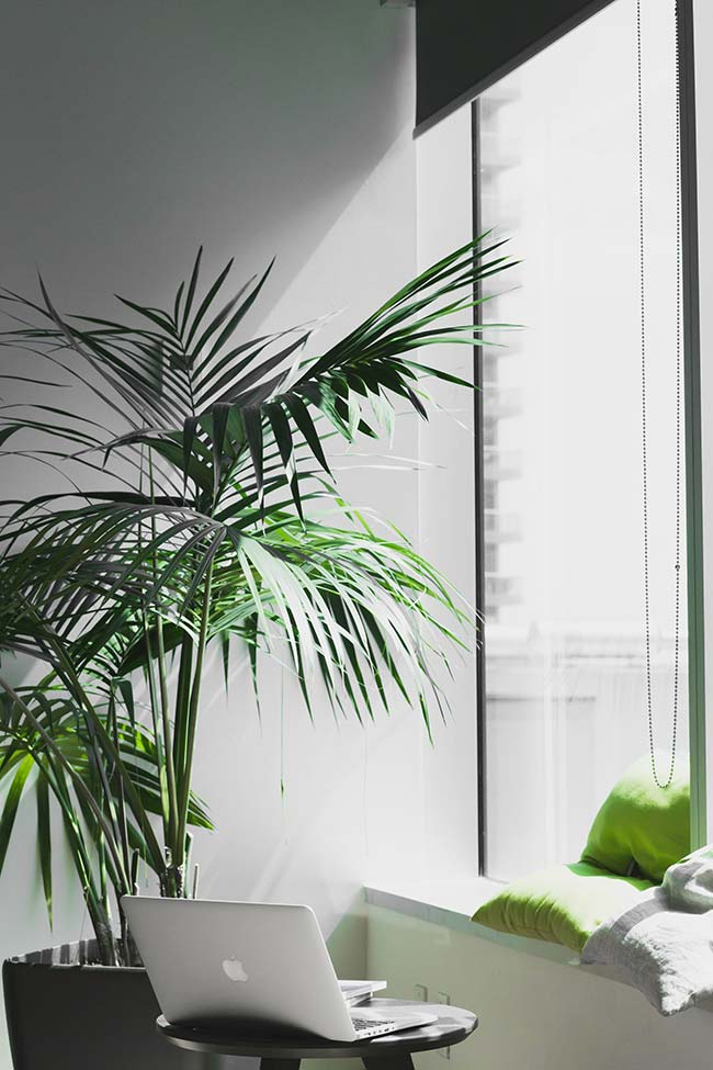 Vaso de palmeira ráfia próximo a janela