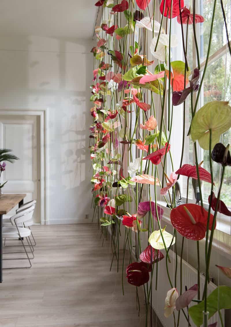Decoração com flores: sala de jantar decorada com uma cortina de antúrios em cores variadas