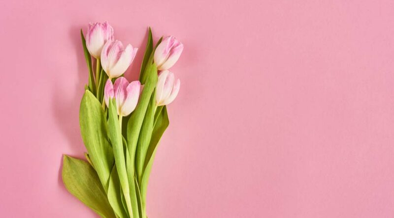 Como cuidar de tulipas: descubra dicas essenciais de cultivo