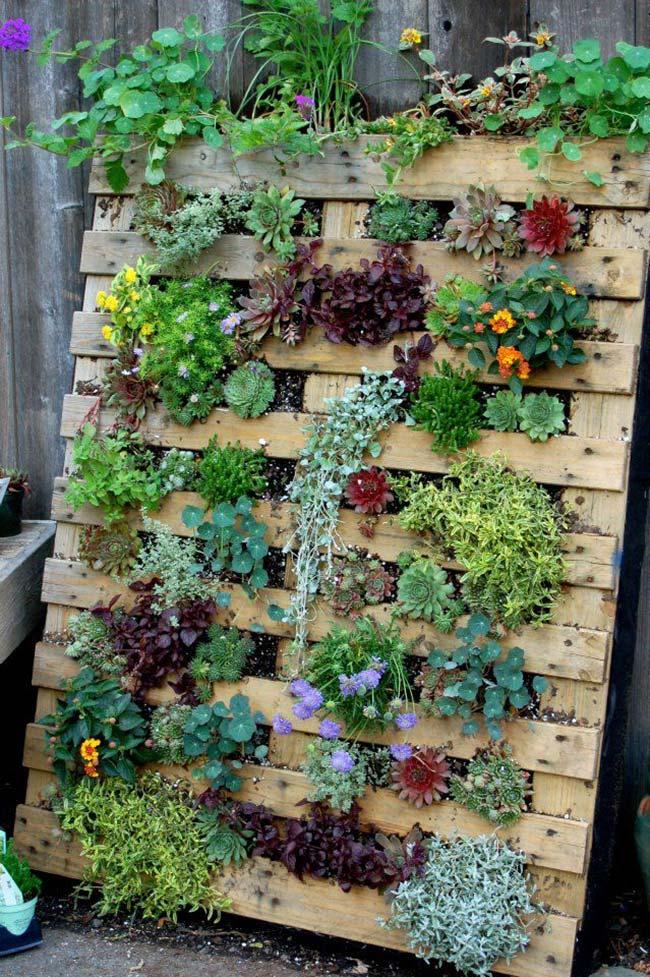 Jardim vertical de pallets com um pouco de tudo