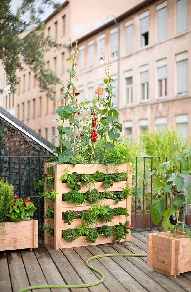 Jardim pequeno de pallets acomoda no topo um belo pé de tomate