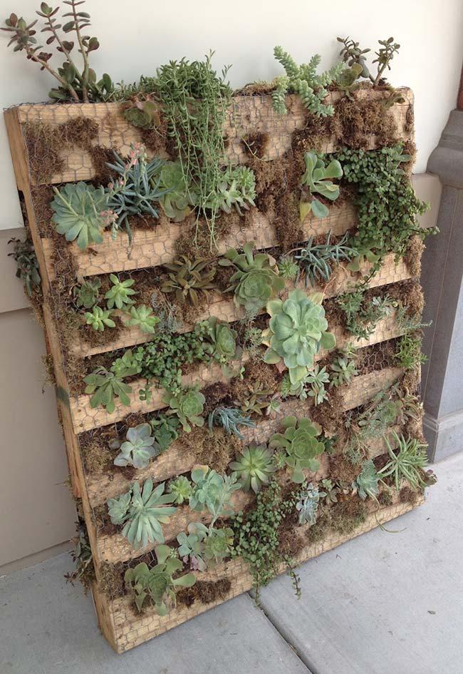 Suculentas são uma ótima opção para quem não tem muito tempo para se dedicar a jardinagem