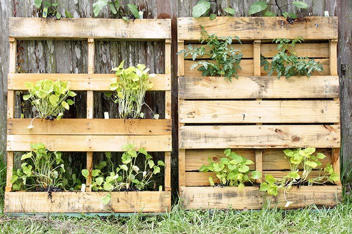 Se a intenção é plantar verduras no jardim vertical, então atente-se para a necessária diária de luz e água de cada espécie