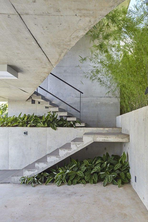 As calateias formam um maciço verde embaixo da escada