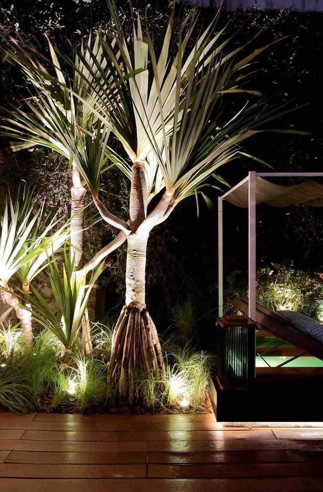 Um efeito e tanto: crie um cenário forte e marcante no jardim com a presença de luzes direcionadas para o tronco das árvores