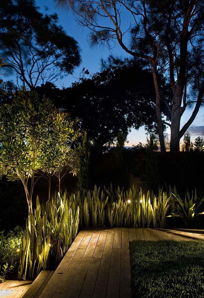Nesse jardim, a iluminação destaca o canteiro de Espadas de São Jorge