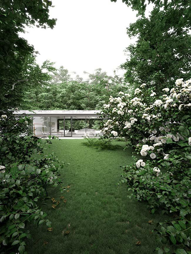 Um jardim de camélias brancas e grama preta