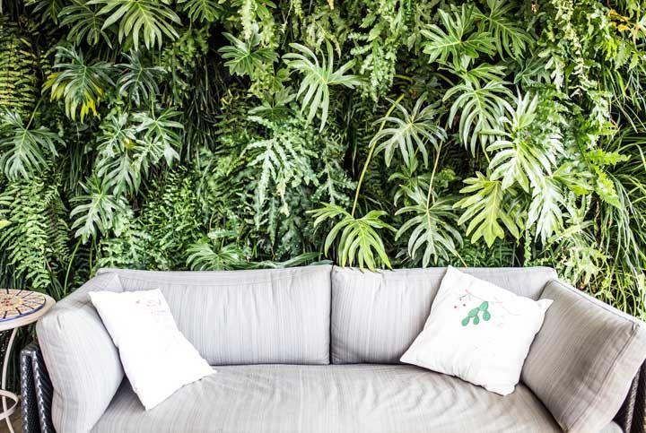 Se você deseja criar um jardim vertical não pense duas vezes: use Costelas de Adão