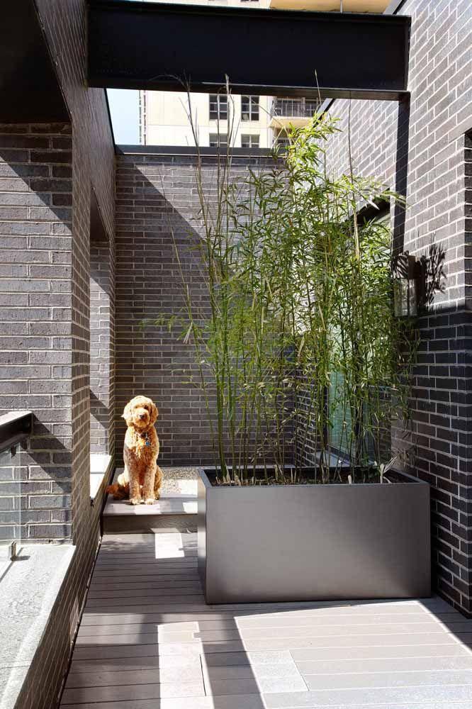 Plantados em um pequeno canteiro, esses bambus mossô tem seu crescimento limitado pela viga do telhado