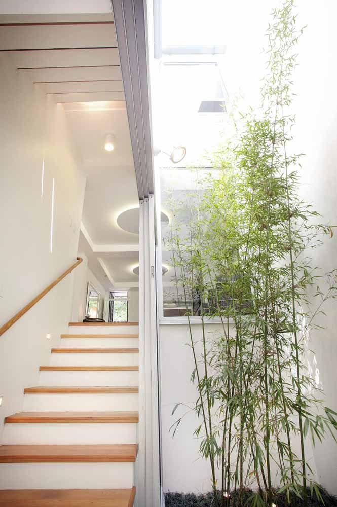 Um cantinho iluminado é tudo que um pé de bambu mossô deseja para crescer bonito e saudável