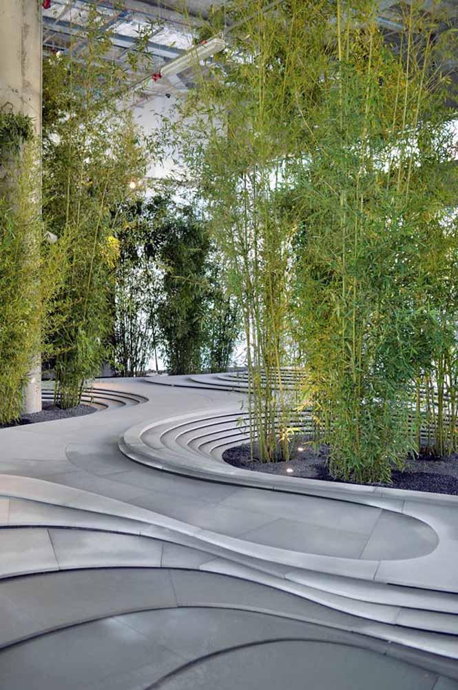 Esses bambus mossô cresceram tanto que já alcançam o teto