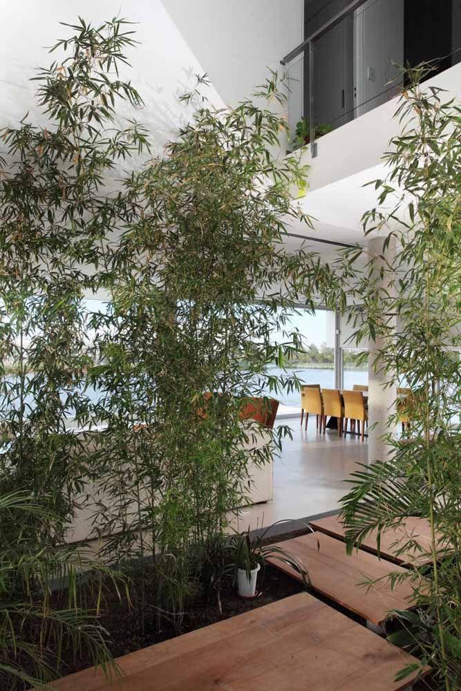 Os bambus mossô são ótimos para criar jardins internos, desde que recebam uma iluminação adequada