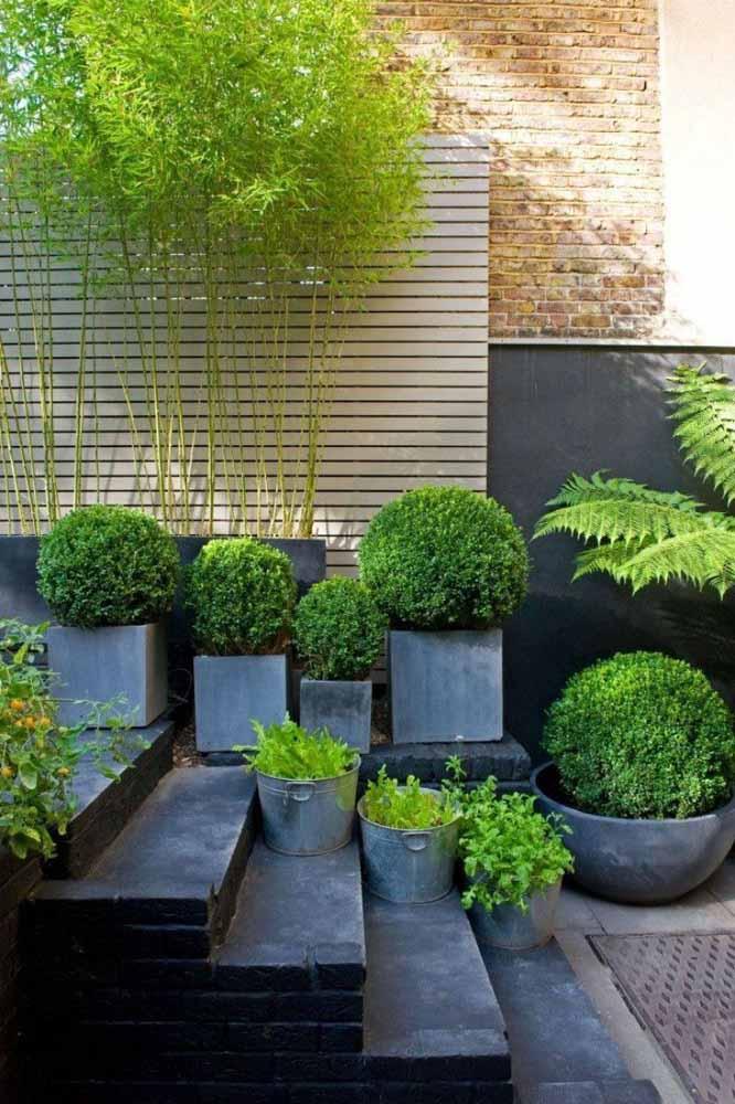 A proposta aqui foi unir plantas altas, no caso o bambu mossô com as buchinhas, espécies menores e bem diferentes da anterior