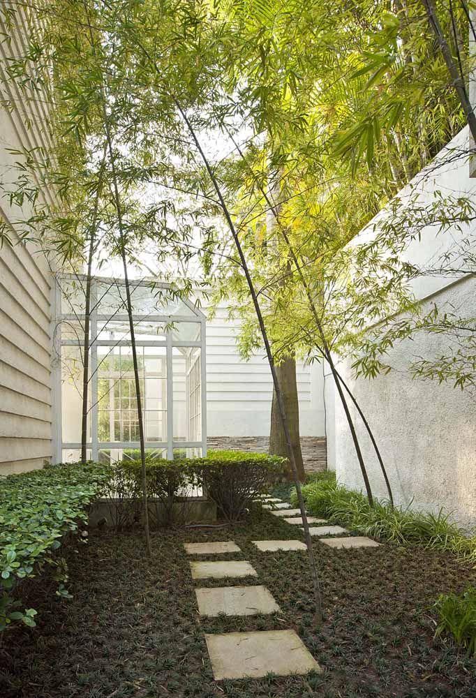 Nesse jardim de inverno, a sombra está garantida com os exemplares de bambus mossô