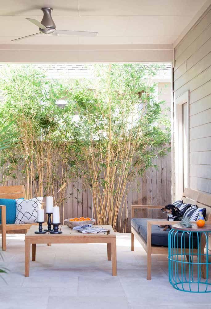 Na mesma cor: nessa sala, móveis e bambus mossô se harmonizam perfeitamente