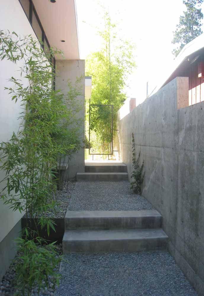 De fácil manutenção, os bambus mossô são excelentes opções para quem não tem muito tempo para jardinagem