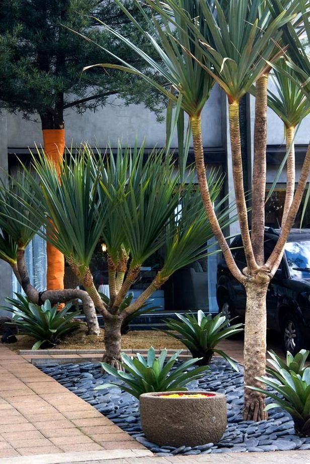 Nesse canteiro, as palmeiras azul e as bromélias compartilham o mesmo espaço com muita harmonia