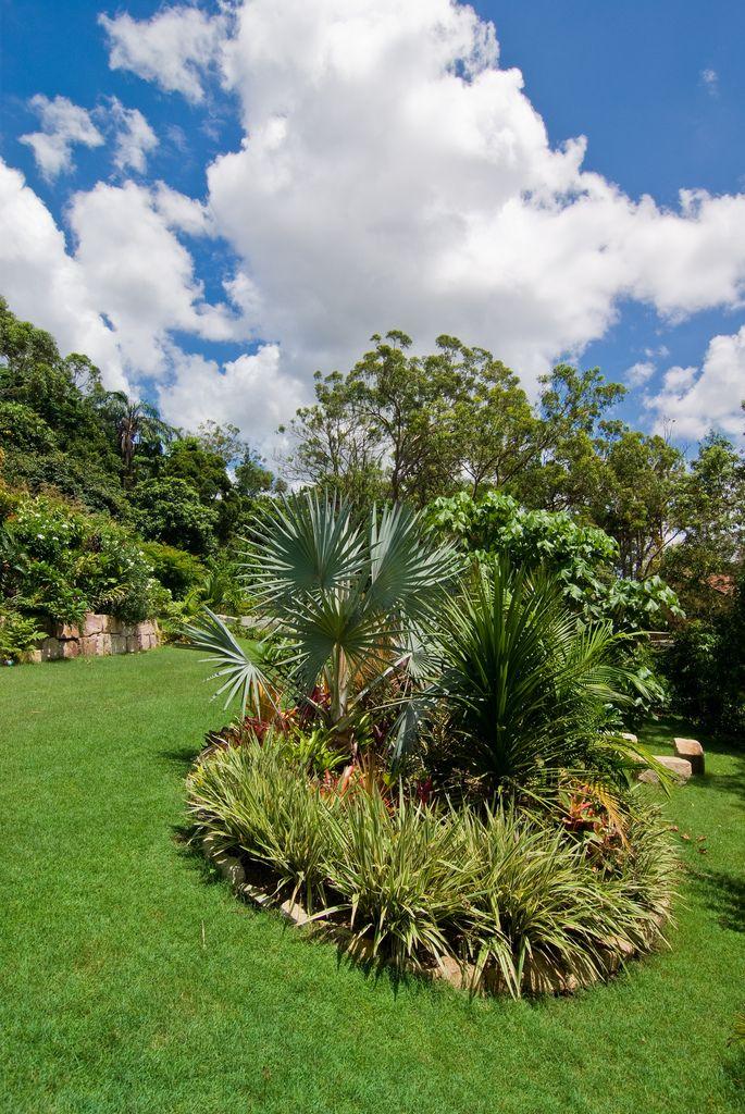 Aqui, a palmeira azul foi combinada com plantas similares formando um maciço verde com o mesmo padrão visual