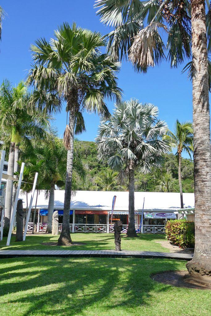 Imponentes e deslumbrantes: as palmeiras são o destaque desse jardim e, convenhamos, não precisa de mais nada mesmo