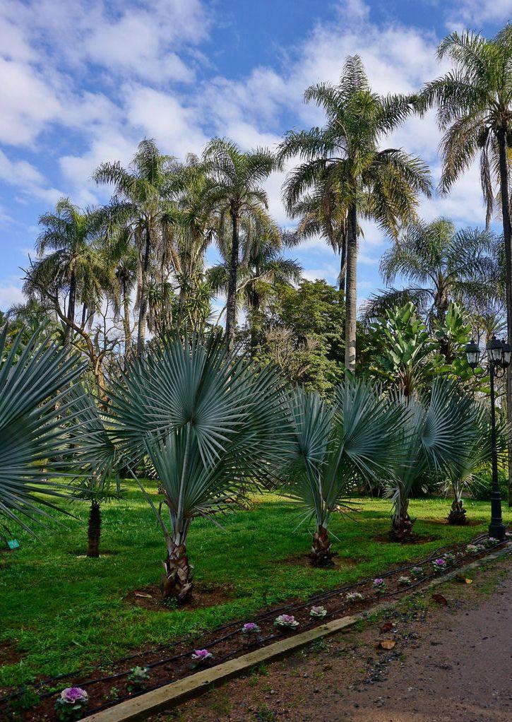 Elas ainda estão pequenininhas, mas imagine como esse caminho vai ficar quando as palmeiras ganharem altura